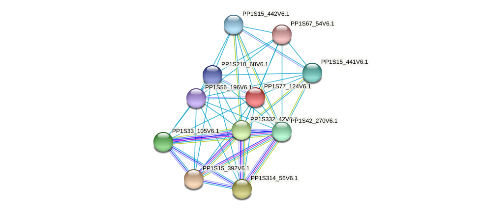 PP1S77_124V6.1 protein (Physcomitrella patens) - STRING interaction network