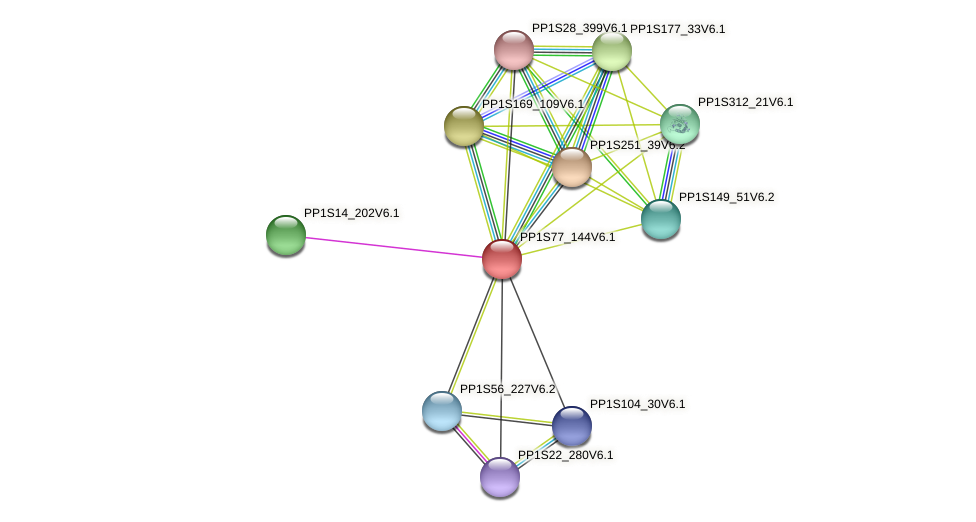 PP1S77_144V6.1 protein (Physcomitrella patens) - STRING interaction network