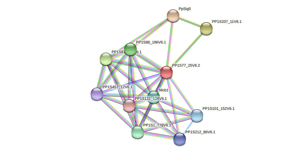 PP1S77_25V6.1 protein (Physcomitrella patens) - STRING interaction network