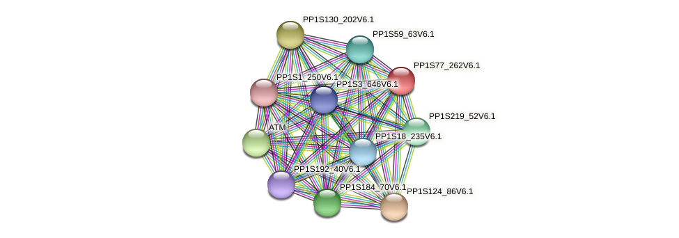 PP1S77_262V6.1 protein (Physcomitrella patens) - STRING interaction network