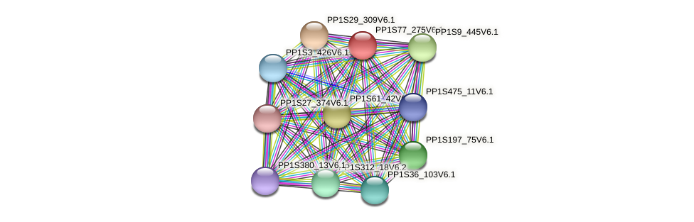 PP1S77_275V6.1 protein (Physcomitrella patens) - STRING interaction network