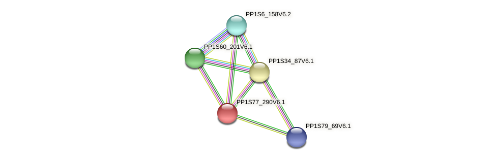 PP1S77_290V6.1 protein (Physcomitrella patens) - STRING interaction network