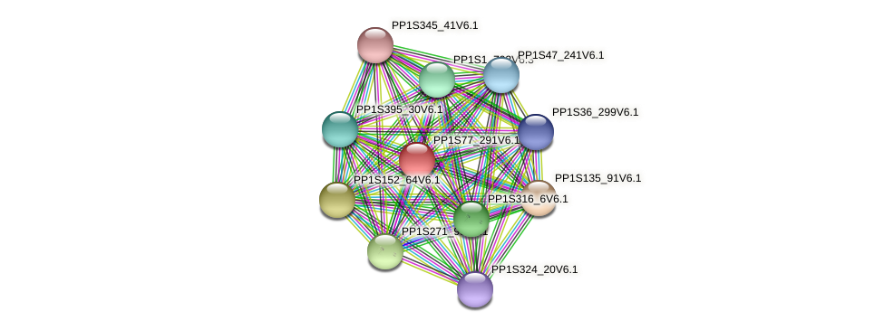 PP1S77_291V6.1 protein (Physcomitrella patens) - STRING interaction network