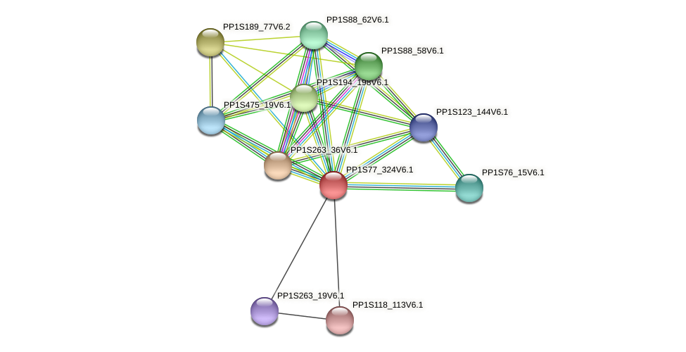PP1S77_324V6.1 protein (Physcomitrella patens) - STRING interaction network