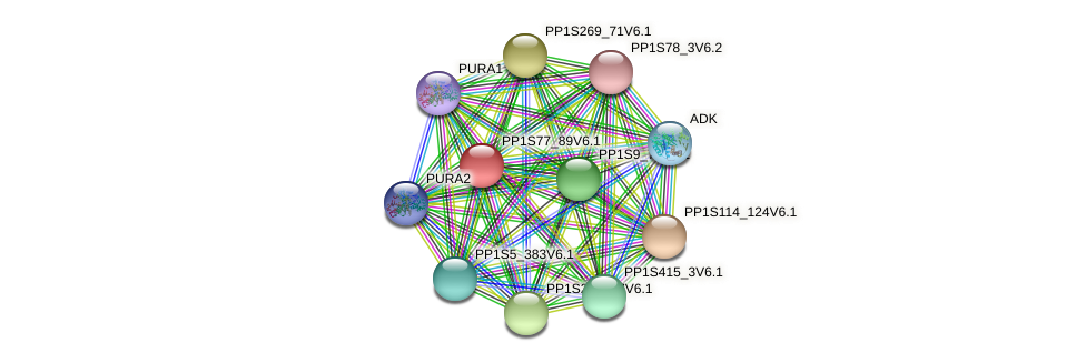 PP1S77_89V6.1 protein (Physcomitrella patens) - STRING interaction network