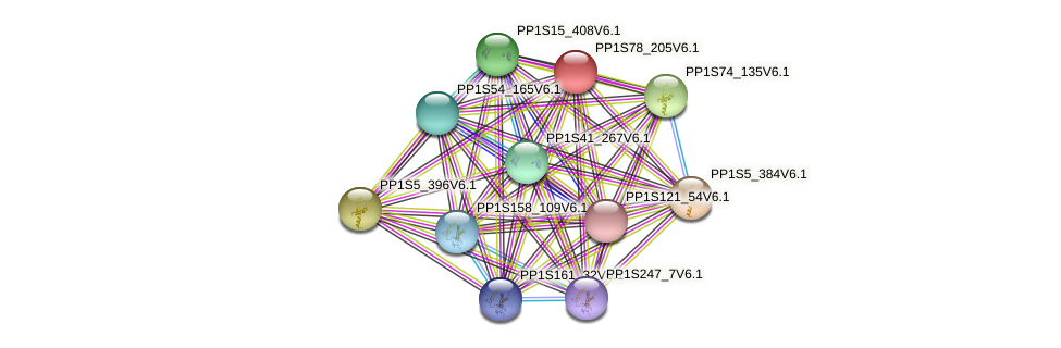 PP1S78_205V6.1 protein (Physcomitrella patens) - STRING interaction network