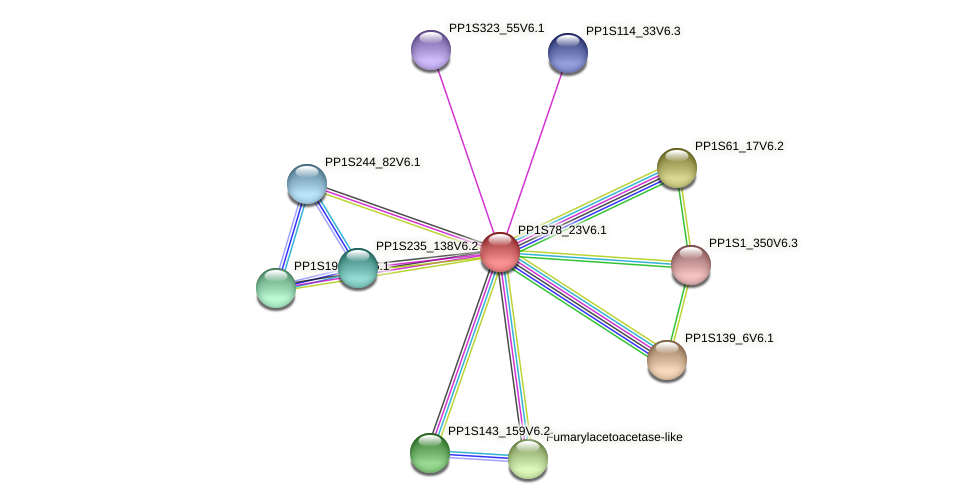 PP1S78_23V6.1 protein (Physcomitrella patens) - STRING interaction network
