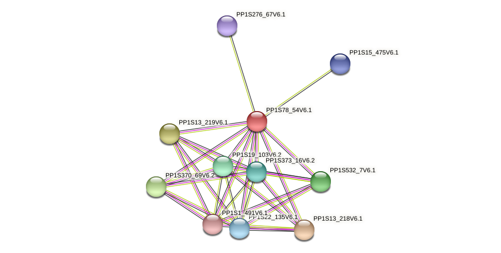 PP1S78_54V6.1 protein (Physcomitrella patens) - STRING interaction network