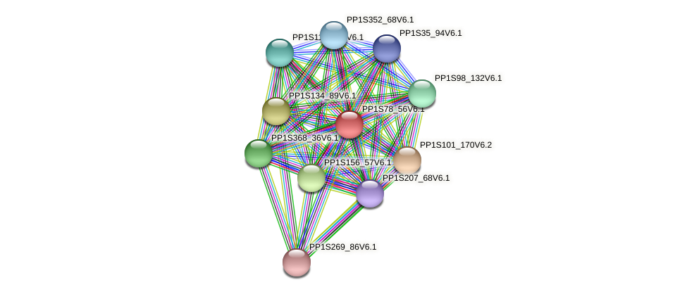 PP1S78_56V6.1 protein (Physcomitrella patens) - STRING interaction network