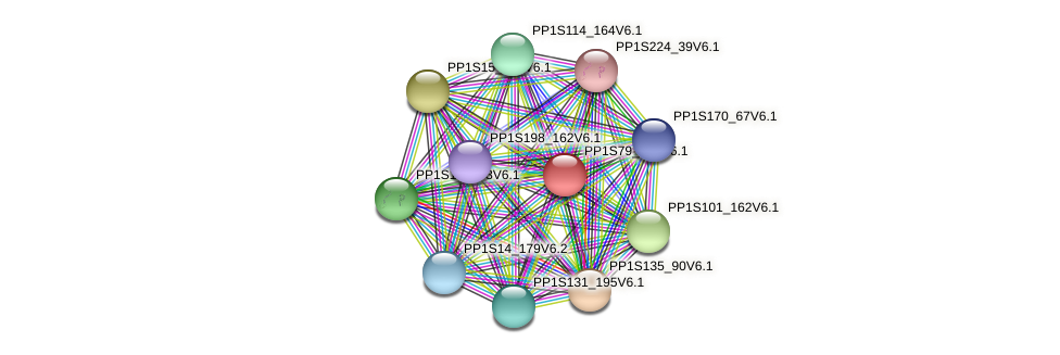 PP1S79_105V6.1 protein (Physcomitrella patens) - STRING interaction network