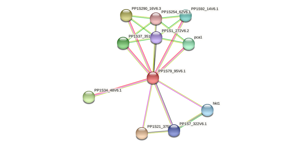 PP1S79_95V6.1 protein (Physcomitrella patens) - STRING interaction network