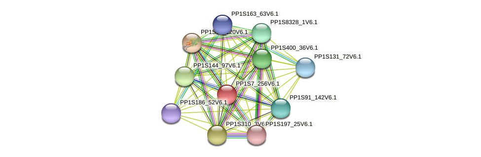 PP1S7_256V6.1 protein (Physcomitrella patens) - STRING interaction network