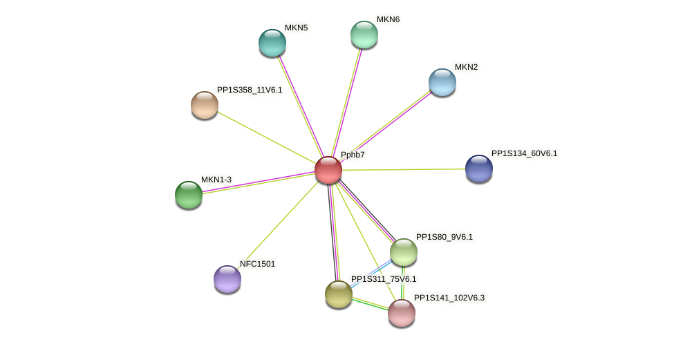 Pphb7 protein (Physcomitrella patens) - STRING interaction network
