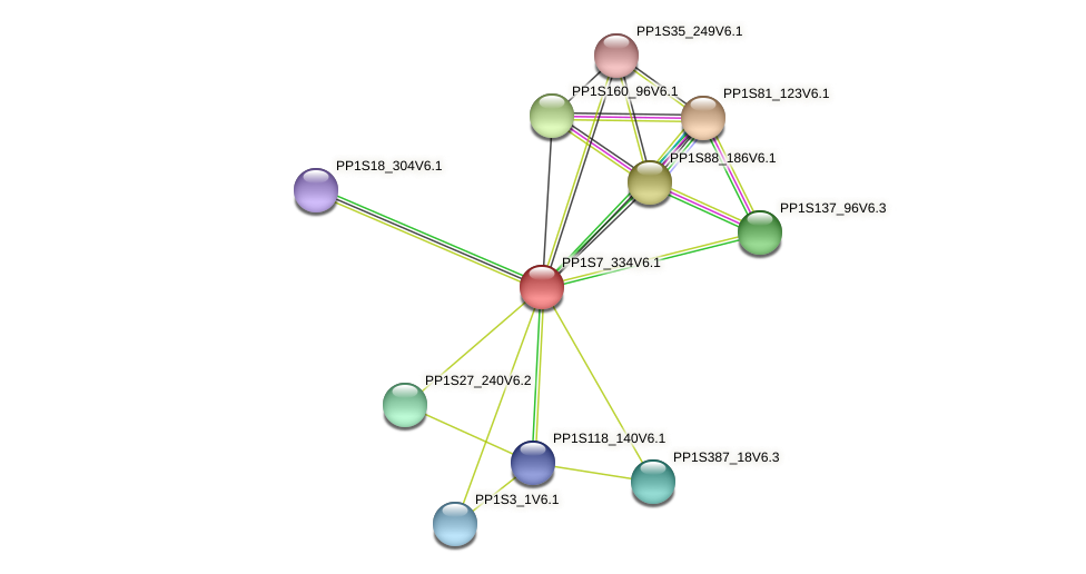PP1S7_334V6.1 protein (Physcomitrella patens) - STRING interaction network