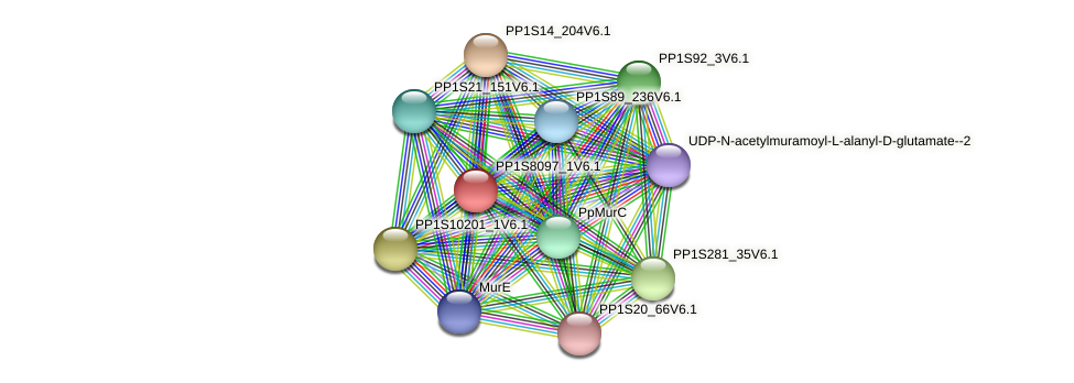 PP1S8097_1V6.1 protein (Physcomitrella patens) - STRING interaction network