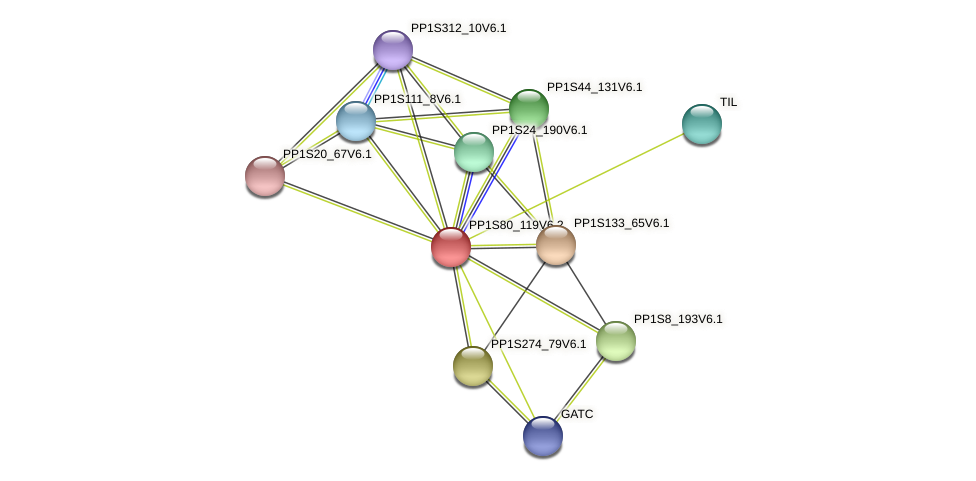 PP1S80_119V6.1 protein (Physcomitrella patens) - STRING interaction network