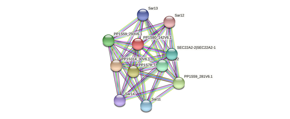 PP1S80_142V6.1 protein (Physcomitrella patens) - STRING interaction network
