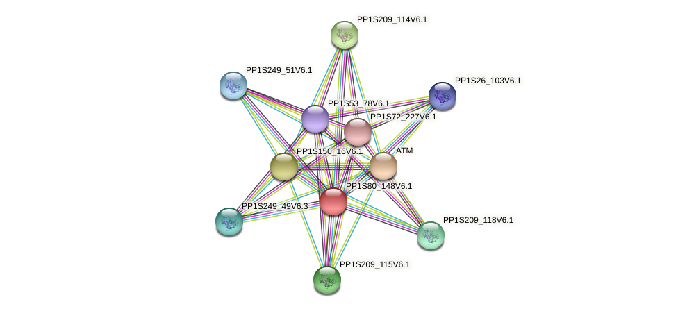 PP1S80_148V6.1 protein (Physcomitrella patens) - STRING interaction network