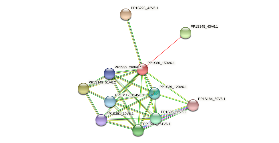 PP1S80_159V6.1 protein (Physcomitrella patens) - STRING interaction network
