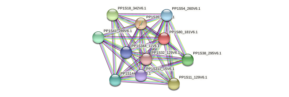 PP1S80_181V6.1 protein (Physcomitrella patens) - STRING interaction network