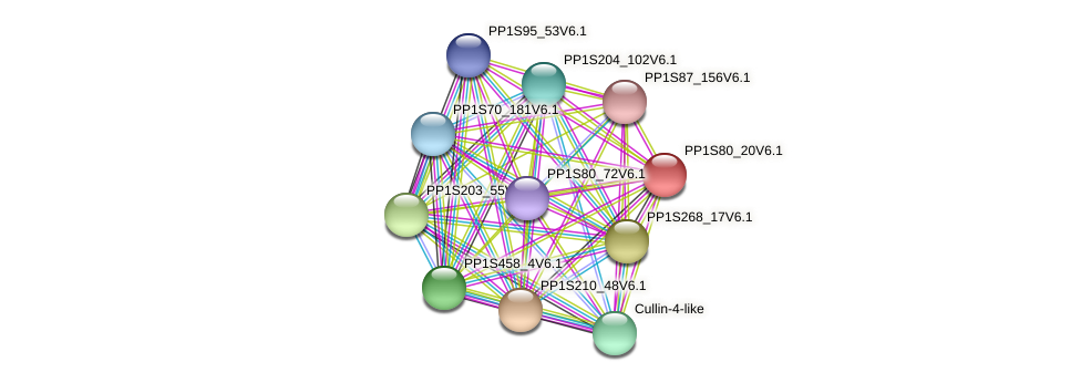 PP1S80_20V6.1 protein (Physcomitrella patens) - STRING interaction network