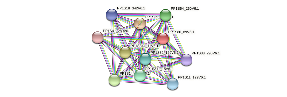 PP1S80_89V6.1 protein (Physcomitrella patens) - STRING interaction network
