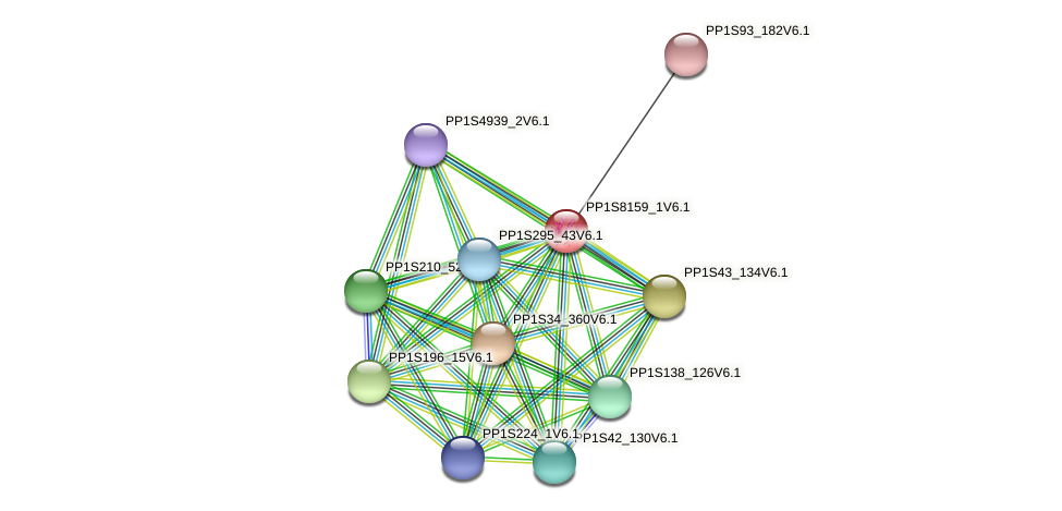 PP1S8159_1V6.1 protein (Physcomitrella patens) - STRING interaction network