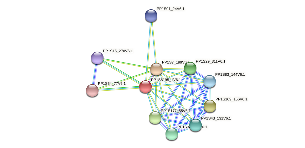 PP1S8195_1V6.1 protein (Physcomitrella patens) - STRING interaction network