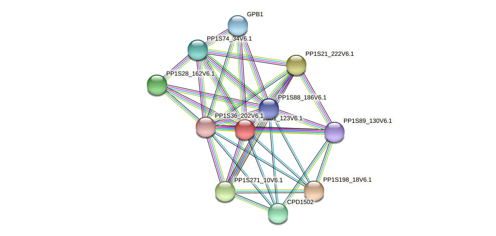 PP1S81_123V6.1 protein (Physcomitrella patens) - STRING interaction network