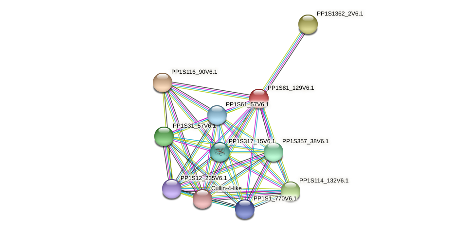 PP1S81_129V6.1 protein (Physcomitrella patens) - STRING interaction network