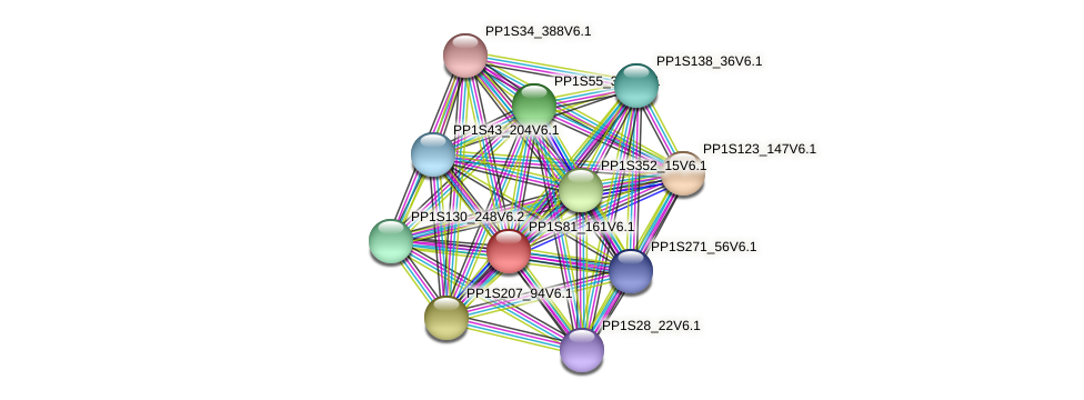 PP1S81_161V6.1 protein (Physcomitrella patens) - STRING interaction network