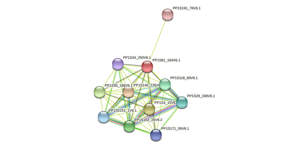 PP1S81_164V6.1 protein (Physcomitrella patens) - STRING interaction network