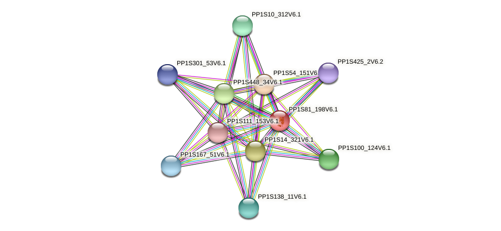 PP1S81_198V6.1 protein (Physcomitrella patens) - STRING interaction network