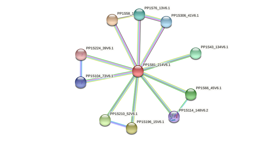 PP1S81_214V6.1 protein (Physcomitrella patens) - STRING interaction network