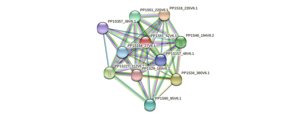 PP1S81_42V6.1 protein (Physcomitrella patens) - STRING interaction network