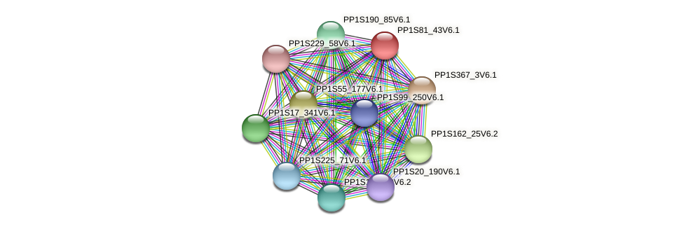 PP1S81_43V6.1 protein (Physcomitrella patens) - STRING interaction network