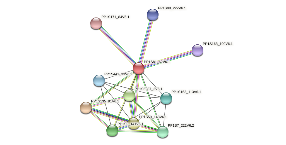 PP1S81_62V6.1 protein (Physcomitrella patens) - STRING interaction network