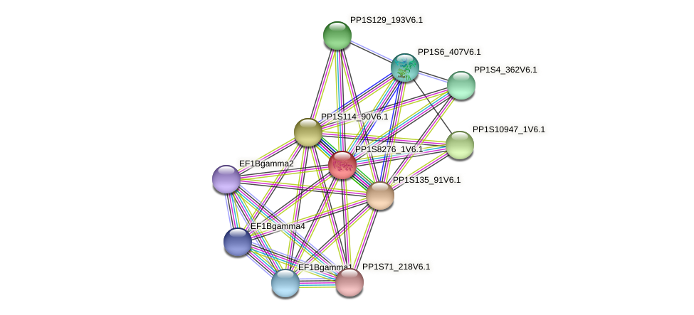 PP1S8276_1V6.1 protein (Physcomitrella patens) - STRING interaction network