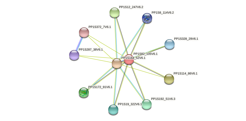 PP1S82_105V6.1 protein (Physcomitrella patens) - STRING interaction network