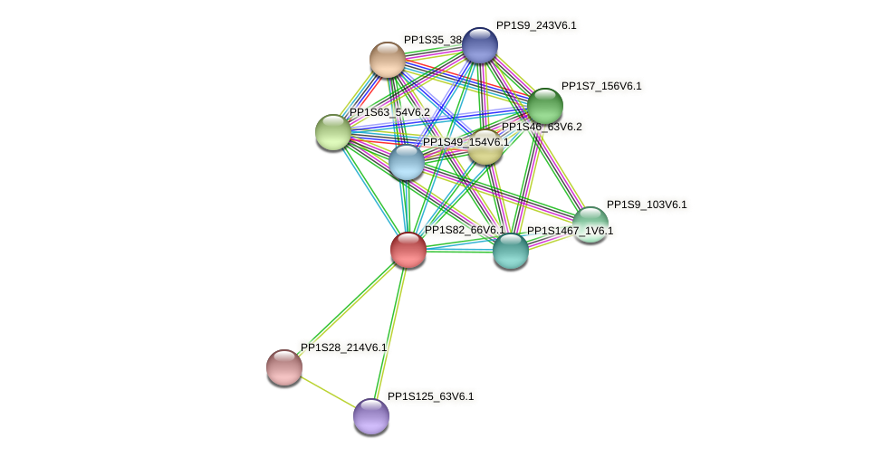PP1S82_66V6.1 protein (Physcomitrella patens) - STRING interaction network