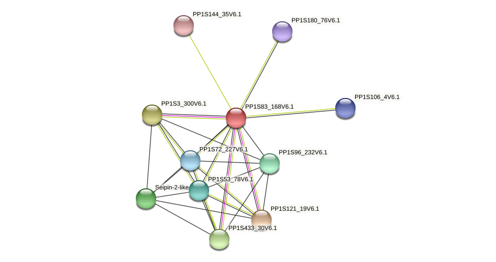 PP1S83_168V6.1 protein (Physcomitrella patens) - STRING interaction network