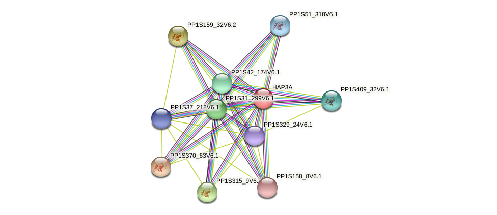PP1S83_179V6.1 protein (Physcomitrella patens) - STRING interaction network