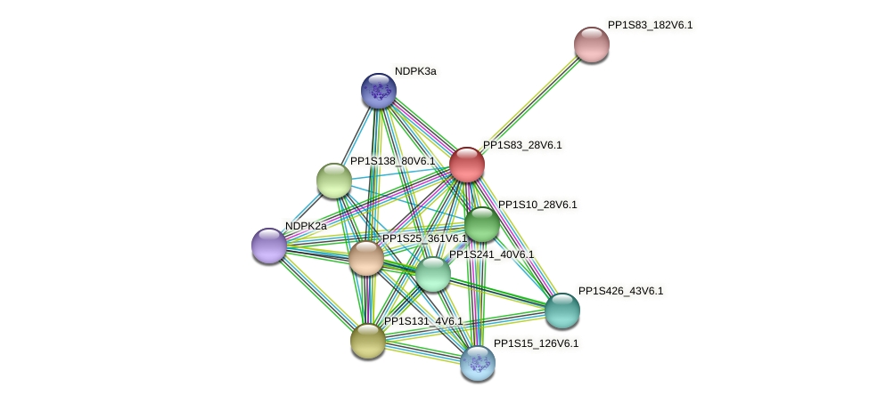 PP1S83_28V6.1 protein (Physcomitrella patens) - STRING interaction network