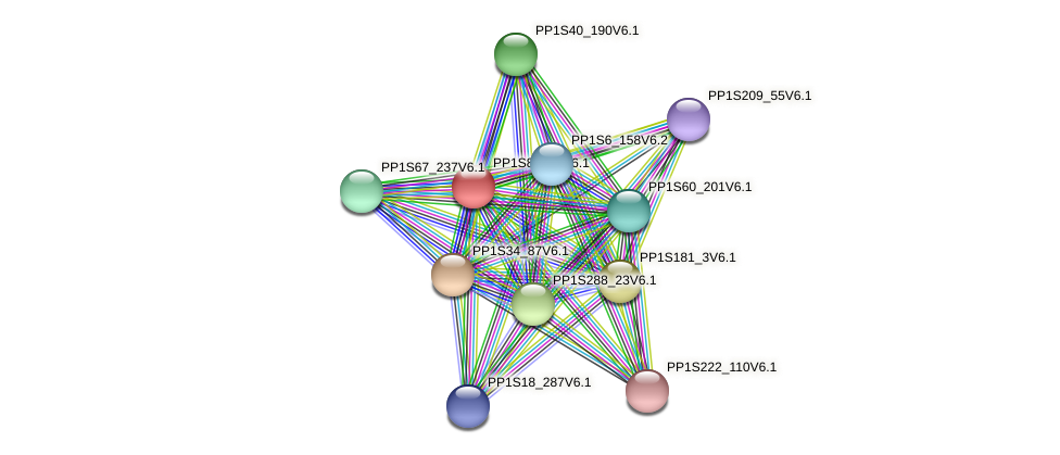 PP1S83_34V6.1 protein (Physcomitrella patens) - STRING interaction network