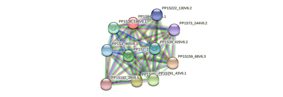 PP1S8429_1V6.1 protein (Physcomitrella patens) - STRING interaction network