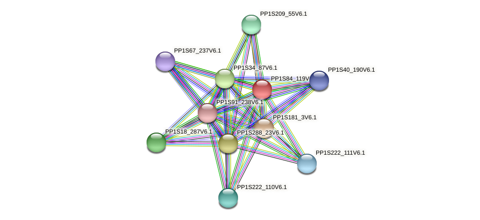 PP1S84_119V6.1 protein (Physcomitrella patens) - STRING interaction network