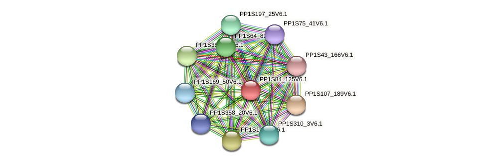 PP1S84_125V6.1 protein (Physcomitrella patens) - STRING interaction network