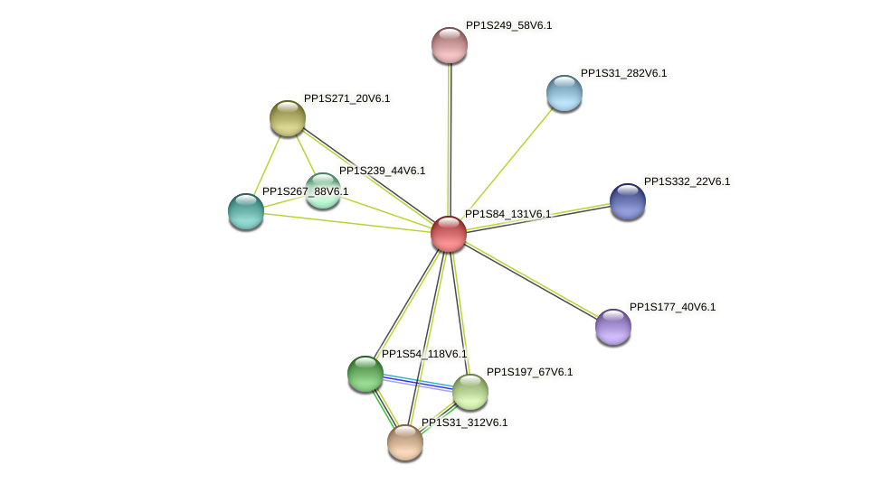 PP1S84_131V6.1 protein (Physcomitrella patens) - STRING interaction network