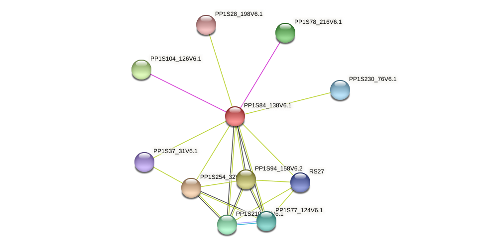 PP1S84_138V6.1 protein (Physcomitrella patens) - STRING interaction network