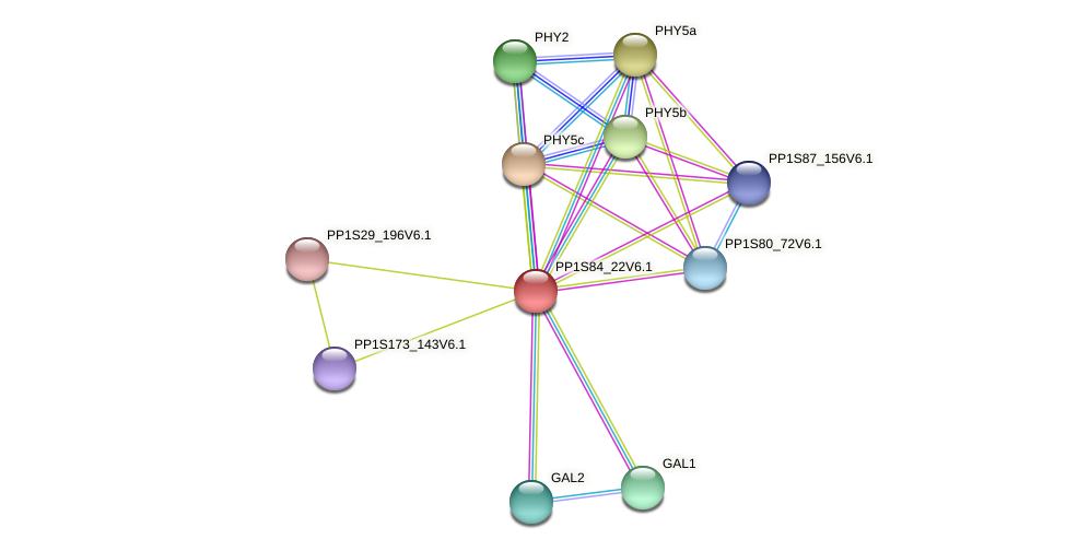PP1S84_22V6.1 protein (Physcomitrella patens) - STRING interaction network